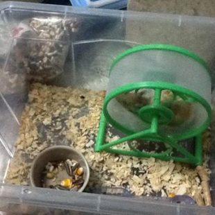 Quà của bông  – hamster xinh xinh