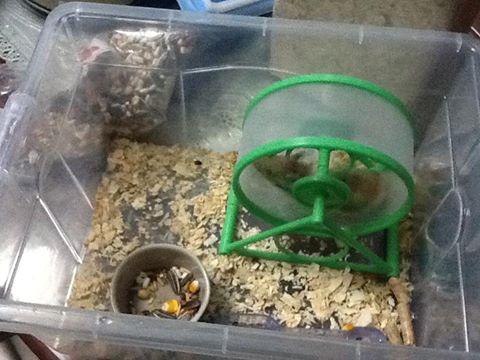 qua-cua-bong-hamster
