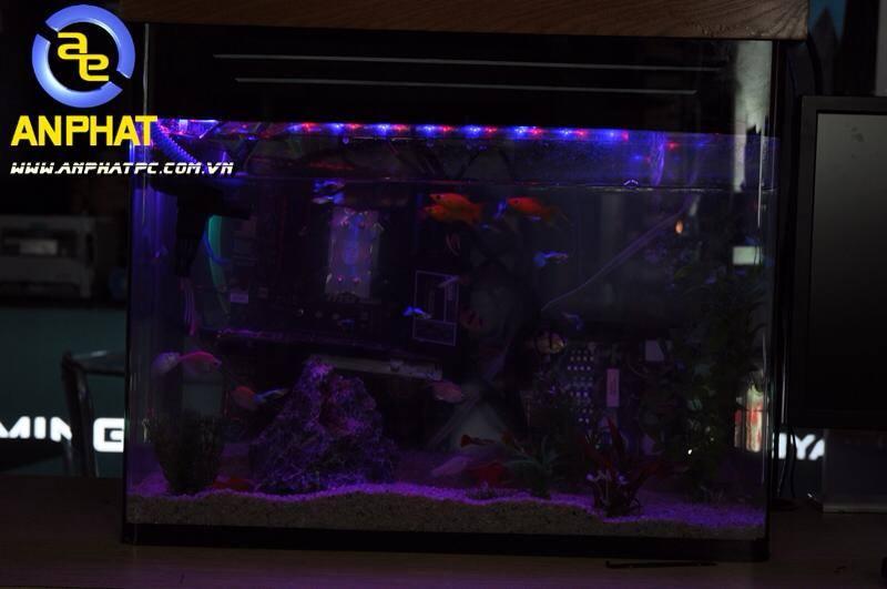 dtien87_pc_aquarium_gaming_be_ca_may_tinh_choi_game_an_phat_pc_10_11_2014_9